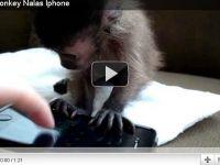 VIDEO Un pui de maimuta se joaca cu un iPhone