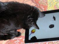 VIDEO Tableta iPad, preferata pisicilor! Vezi cum arata un joc special pentru feline