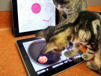 FOTO si VIDEO: Prima aplicatie iPad din lume pentru pisici! Un soarece le termina psihic in timp ce incearca sa-l prinda
