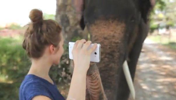 VIDEO INCREDIBIL! Primul elefant care si-a luat Galaxy Note: Canta la chitara, face poze zi deseneaza! N-ai cum sa nu te indragostesti de el
