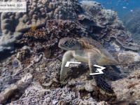 Google coboara in adancuri. Imagini panoramice ale lumii subacvatice cu Marea Bariera de Corali