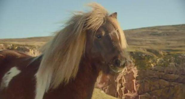 Cum a fost folosit un ponei in afacerile cu telefoane. A ajuns cel mai urmarit clip al momentului pe YouTube