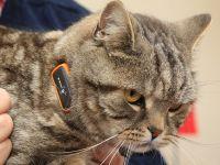 Cat Nav , gadgetul care-ti monitorizeaza animalul de companie