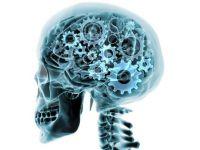 Ceasul intern  al creierului poate determina momentul in care  utilizatorul  acestuia a incetat din viata