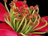 FOTO Frumusetea nevazuta a florilor