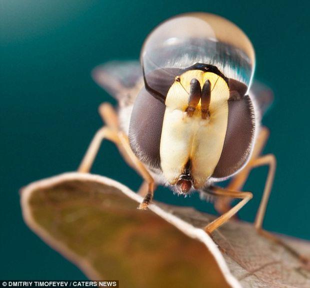 FOTO Apa si insectele intr-o sesiune foto magica