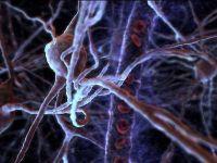 Dezvoltarea rapida a celulelor din creier la varste fragede face ca amintirile din copilarie sa se piarda