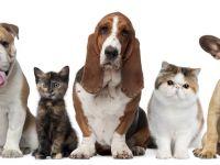 Cele mai bune cinci gadgeturi pentru animalul de companie