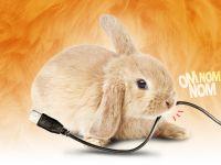 Cum iti protejezi de animale gadgeturile si cablurile