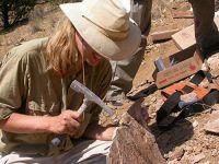 Fosile ale unor mamifere de acum 10 milioane de ani, descoperite in judetul Vaslui