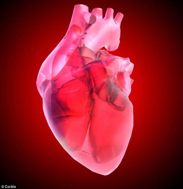 Oamenii de stiinta au creat prima inima pentru soareci din celule stem umane