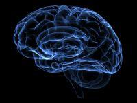 Oamenii de stiinta au descoperit centrul creativitatii din creier