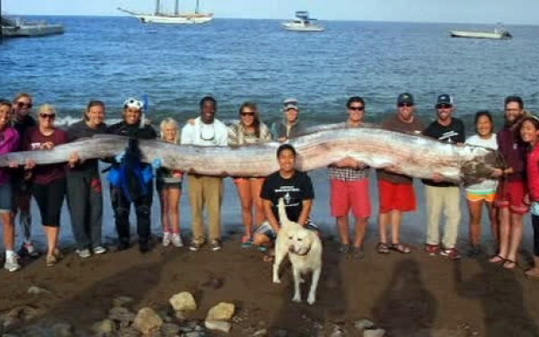 Creatura de 5 metri si jumatate, descoperita in apropiere de California. VIDEO