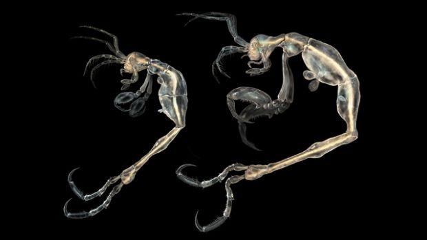 Cum arata cea mai noua specie descoperita de oamenii de stiinta pe Terra