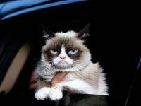 Pisicile recunosc vocile stapanilor lor dar nu le prea pasa, se arata intr-un nou studiu