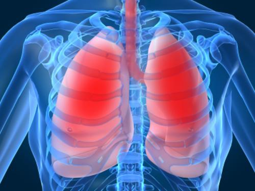 Primii plamani umani confectionati in laborator. In viitor ne vom schimba organele bolnave VIDEO