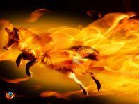 Mozilla Firefox poate castiga razboiul browserelor. Anuntul facut acum