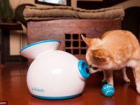 iFetch, dispozitivul care are grija de animalul tau de companie cand tu n-ai chef