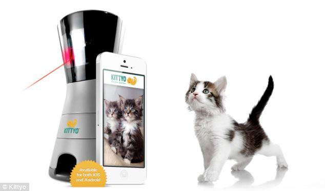 Kittyo, dispozitivul cu ajutorul caruia pisica ta nu-ti va simti lipsa VIDEO