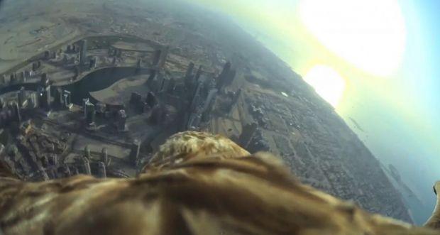 Record mondial spectaculos: zborul de pe Burj Khalifa al unui vultur imperial. Video