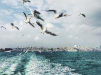 Cele mai frumoase 20 de poze din lume facute cu telefonul mobil