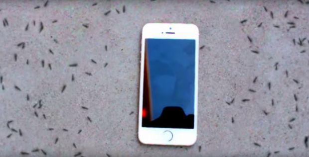 A pus un iPhone in mijlocul a peste 300 de furnici! Ce urmeaza este foarte trist