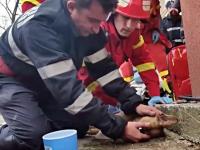 Gestul eroic al unui pompier roman - subiect viral pe Facebook!