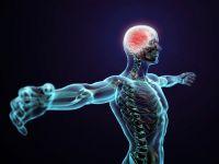 Un nou organ identificat in corpul uman! Cartile de medicina trebuie rescrise