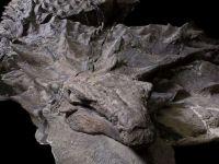 Descoperire unica in lume! A fost gasita o fosila care seamana cu un dragon din  Game of Thrones