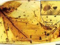 Surpriza deosebita pentru cercetatori! Ce-au gasit intr-o bucata de chihlimbar de acum 99 de milioane de ani