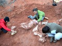 Fosilele primului dinozaur de dimensiuni gigantice, descoperite în Argentina. Cum arăta