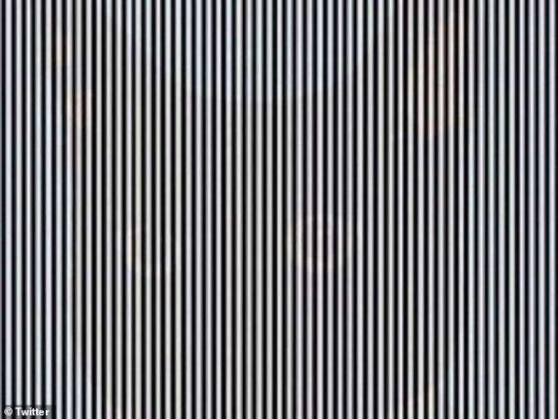 Poți observa animalul ascuns în imagine? Iluzie optică surprinzătoare