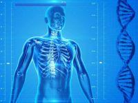 Descoperire neașteptată despre corpul uman. Ce au observat cercetătorii în interiorul oaselor