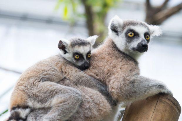 Un milion de specii de plante și animale, la un pas de extincție. Cercetătorii avertizează asupra unui dezastru