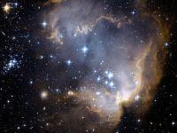 NASA se pregăteşte să trimită organisme vii în spaţiul cosmic