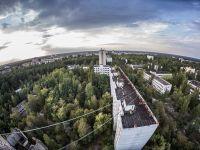 Misterul de la Cernobîl. De ce plantele de aici nu sunt afectate de radiații