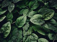 Plantele pot comunica între ele prin sunete pe care omul nu le percepe