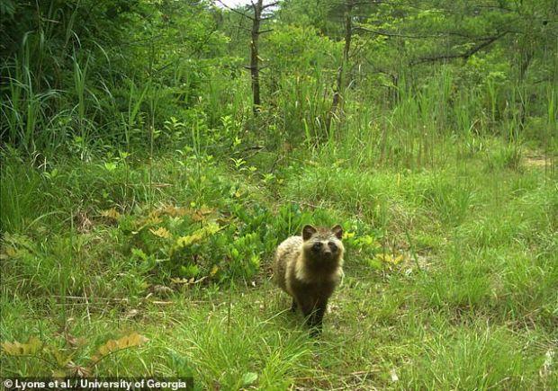 Imagini tulburătoare surprinse în zona interzisă de la Fukushima. Ce se întâmplă cu animalele sălbatice?