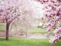 Cât de cald va fi primăvara aceasta? Anunțul făcut de Organizația Meteorologică Mondială