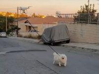 Ca să respecte carantina, un bărbat și-a scos câinele la plimbare cu drona