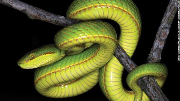 O nouă specie de reptilă primește un nume inedit. Fanii Harry Potter vor fi încântați