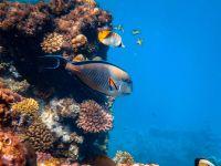 Metodă inedită pentru salvarea Marii Bariere de Corali. Ce au descoperit cercetătorii