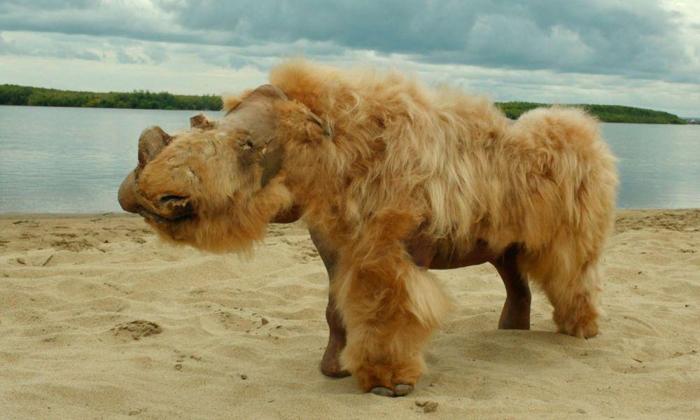 Adevăratul motiv care a dus la extincția rinocerilor lânoși