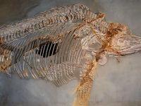 Noi specii de animale preistorice au fost identificate în România