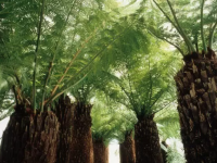 Plantele care trăiesc pe Pământ și sunt mai vechi decât dinozaurii. Sunt adevărate minuni naturale