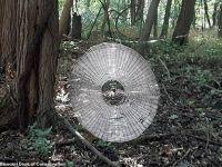 Misterul uriașei pânze de păianjen, de dimensiunea unui om. Cum a fost construită?
