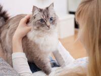 Care e cel mai eficient mod de a bdquo;vorbi  cu pisica ta. Metoda care chiar funcționează