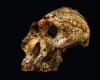 A fost găsită veriga lipsă? Un craniu vechi de două milioane de ani pune într-o nouă lumina evoluția umană