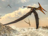 Strămoșii primelor animale zburătoare de pe Terra provin din hellip; bdquo;dragoni