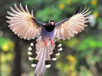 Simțul cuantic misterios pe care îl au doar păsările. Cercetătorii au observat cauzele, în premieră